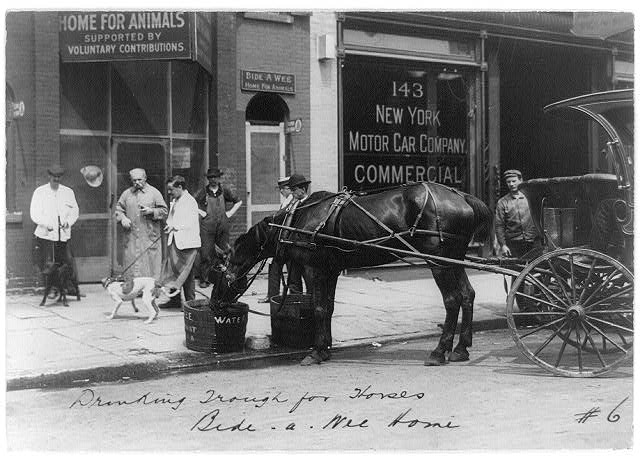 [Bide-A-Wee Home for Animals, New York, N.Y.: horse drinking from trough]