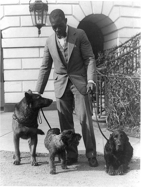 [Robert R. Watson(?) or Robinson(?), kennel master at the White House, with pets of Herbert Hoover, King Tut, a Belgian police dog; Whoopie, a schnauzer; and Englehurst Gillette, a Gordon setter]