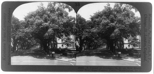 A tunnel of verdure; N.E. on New Hampshire Ave., from Dupont Circle, Washington, D.C.