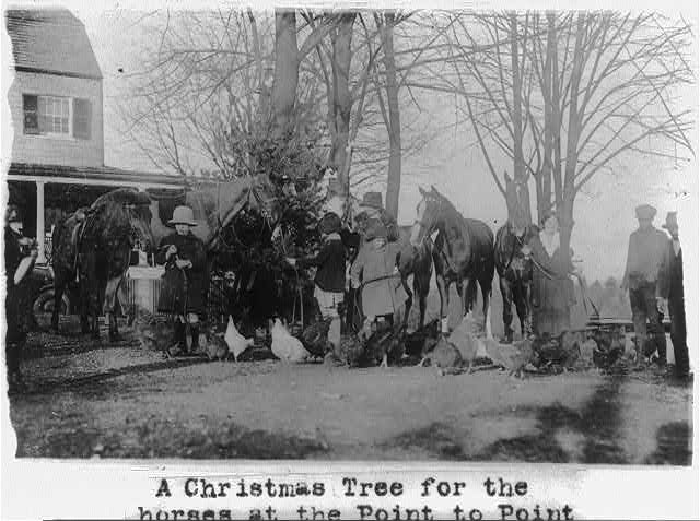 A Christmas tree for the horses at the Point to Point Riding School near Wash., D.C.
