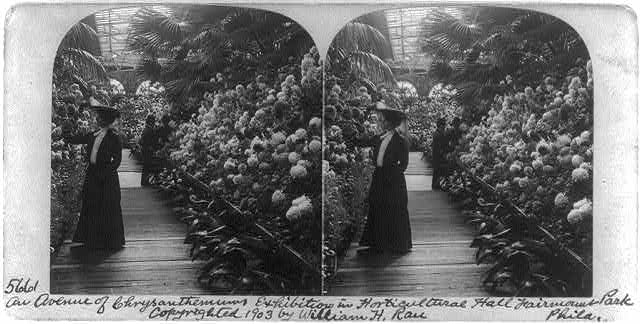 An avenue of chrysanthemums, exhibition in Horticulture Hall, Fairmont Park, Phila.