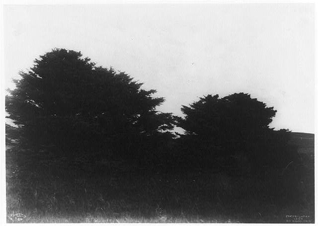 [Trees in landscape, taken during the Harriman Alaska Expedition of 1899]