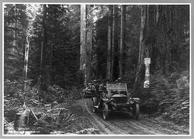 [Two open-air cars filled with tourists on road in Olympic National Forest, Washington, and two advertisement signs on tree]