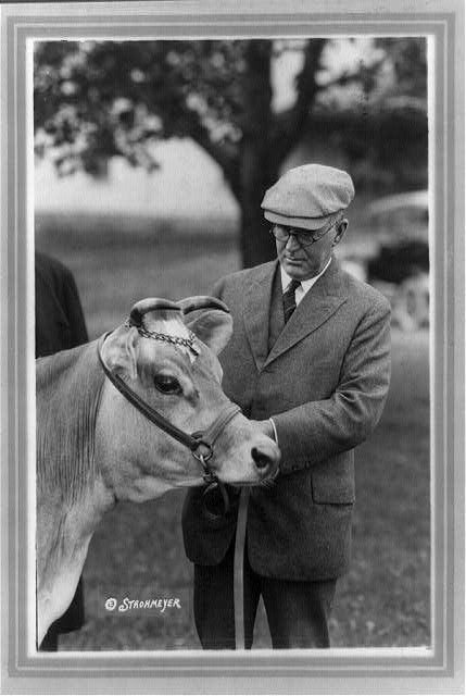[Henry Cantwell Wallace, three-quarter length portrait, standing, looking at Fern's Oxford Triumph, a cow]