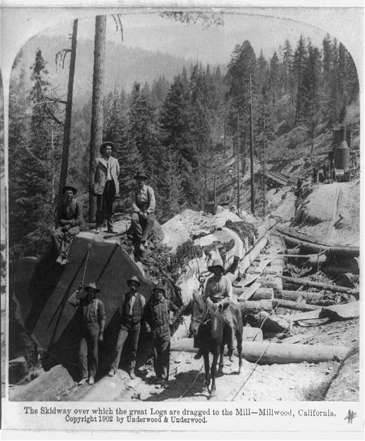 The skidway over which the great logs are dragged to the mill, Millwood, California