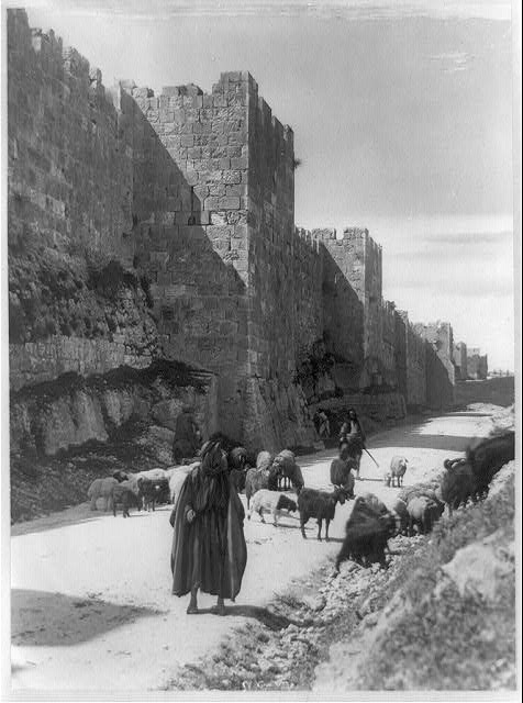 Palestine - Jerusalem. Sheep and goats being taken to market