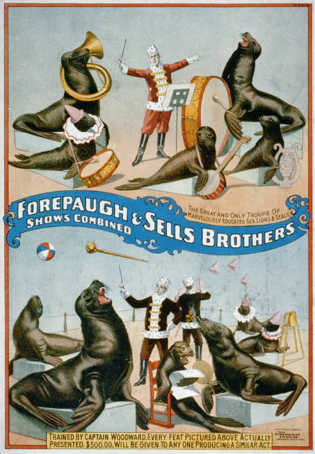 Forepaugh & Sells Brothers shows combined The great and only troupe of marvelously educated sea lions & seals /