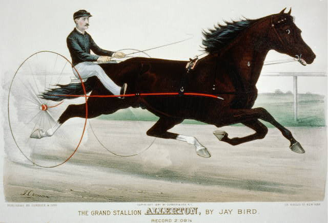 The grand stallion Allerton, by Jay Bird