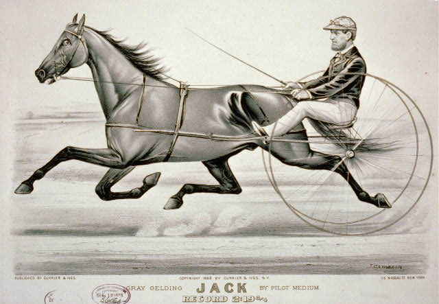 Gray gelding Jack by Pilot Medium