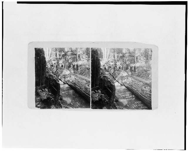 Logging scene in Washington