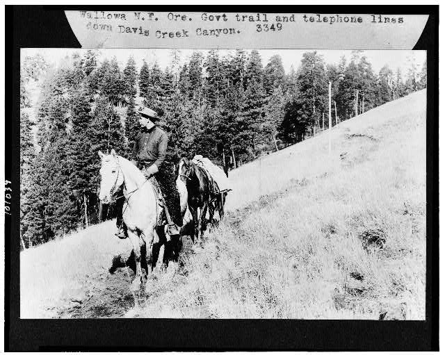 [Man on horseback leading pack horse down Government trail, and telephone lines down Davis Creek Canyon, Wallowa National Forest, Oregon]