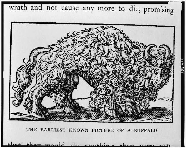 The Earliest known picture of a buffalo