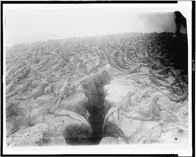 [Large number of iguanas on Galapagos Islands, 1902]