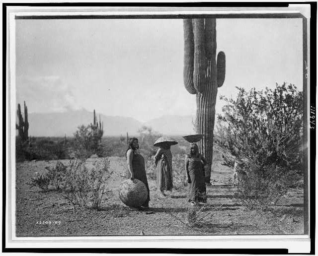[Saguaro fruit gatherers--Maricopa]