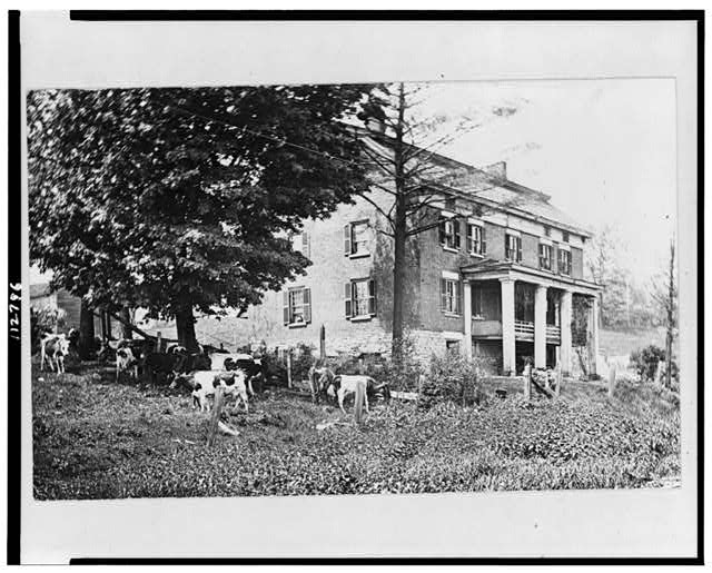 [Cattle grazing near a historic house in Herkimer, New York]