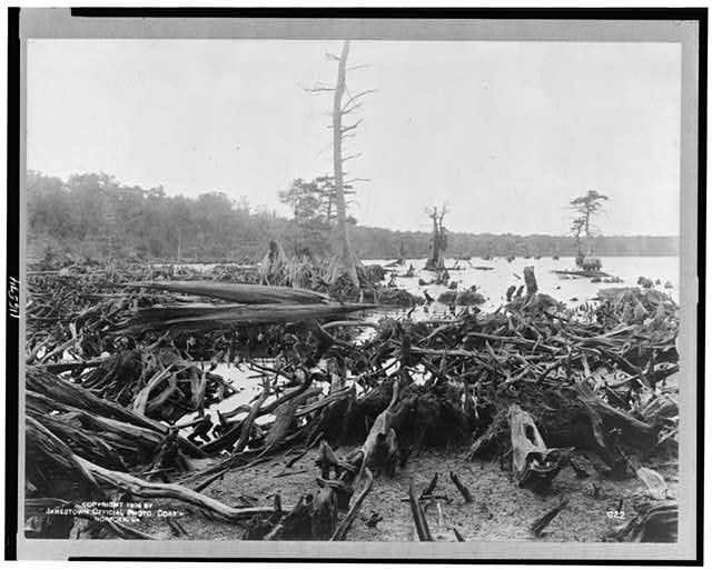 [Scene in the Dismal Swamp, Virginia]