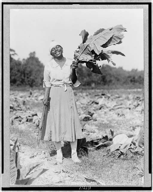 [Woman, full-length portrait, standing in field, facing front, holding tobacco leaf, in Washington, D.C. area(?)]
