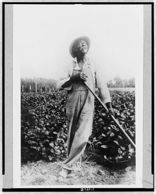 [Full-length portrait of man, standing in field, with hoe(?), looking upward, in Washington, D.C. or New York area]
