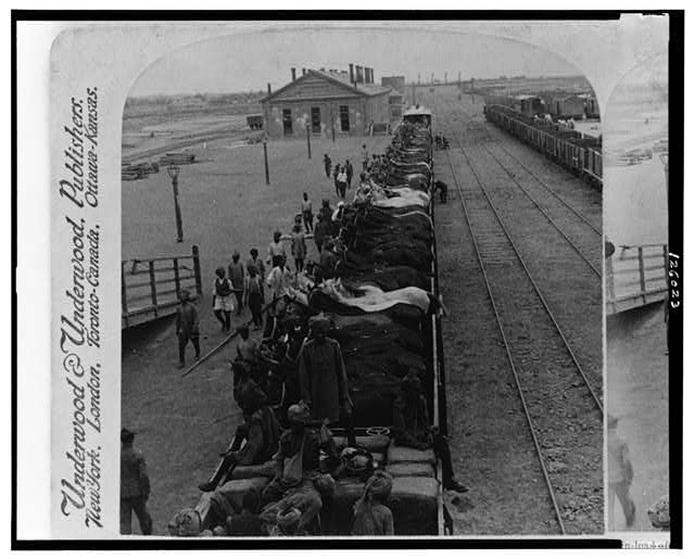 Train-load of 1st Bengal Lancers' horses - in open cars - arrival at station, Tientsin, China