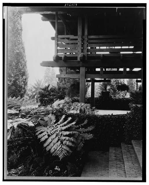 [Fern and other foliage along wall and woodwork, Mr. Gamble's home, Pasadena, California]