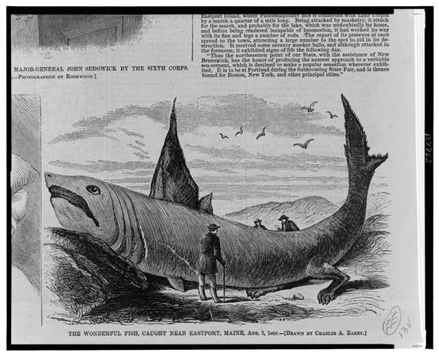 The wonderful fish, caught near Eastport, Maine, Aug. 3, 1868