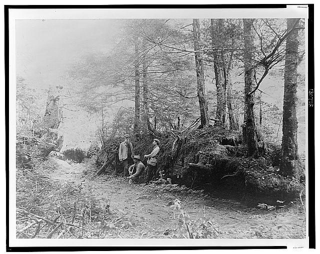 [D.G. Elliot, A.K. Fisher, and Robert Ridgway in woods bordering Indian River, Sitka, Alaska, 1899]