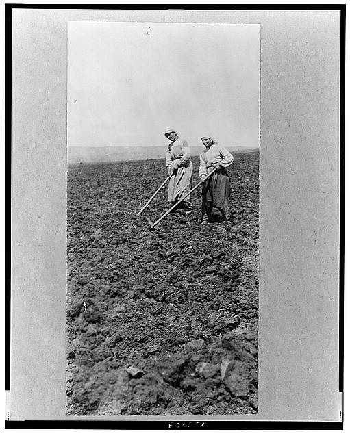 [Armenian refugees from Istanbul, assisted by Near East Relief, farming in field, Rodosto, Thrace]