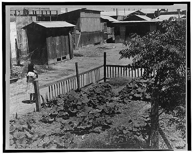 Mexican field laborers' houses. Brawley, Imperial Valley, California
