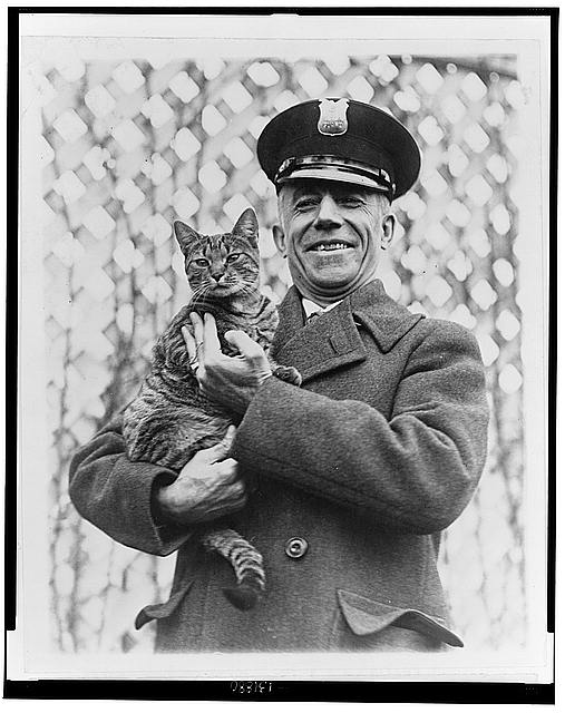 """Tige"" the White House cat and pet of Mrs. Coolidge has been returned"