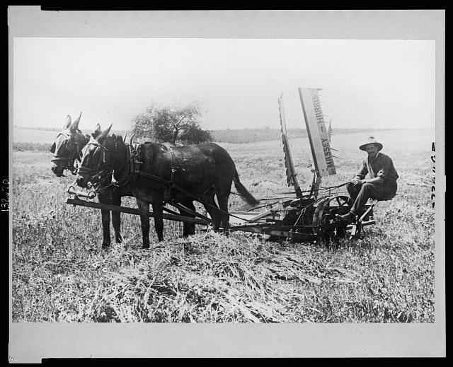 Palestine, Jewish farmer with modern machinery