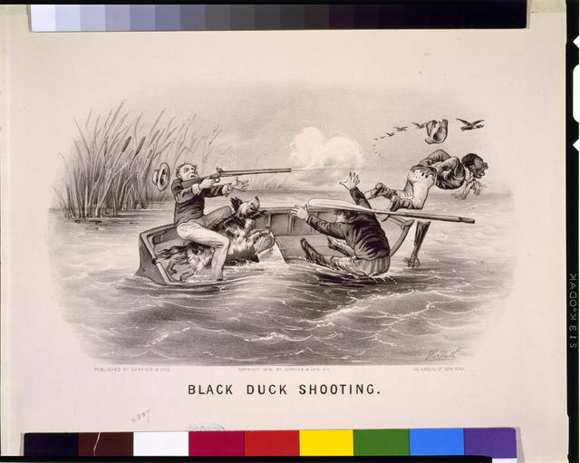 Black duck shooting