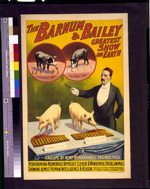 The Barnum & Bailey greatest show on earth--Troupe of very remarkable trained pigs