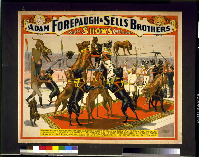 Adam Forepaugh and Sells Brothers great shows consolidated--Colonel Magnus Schult's magnificent $25,000,00 (sic) troup of champion great danes