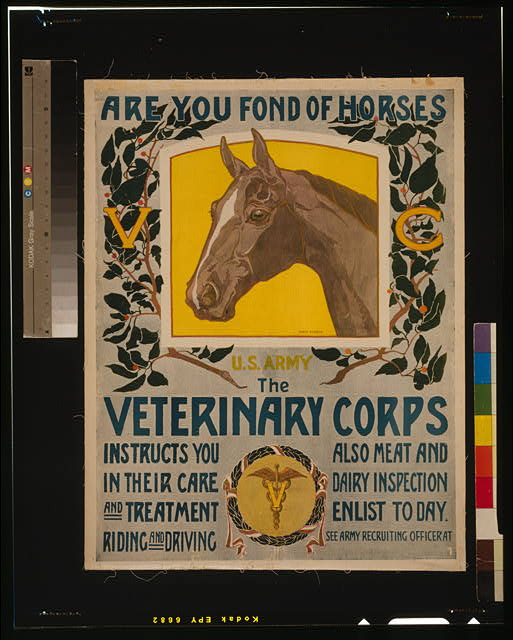 Are you fond of horses - U.S. Army - The Veterinary Corps instructs you in their care and treatment, riding and driving