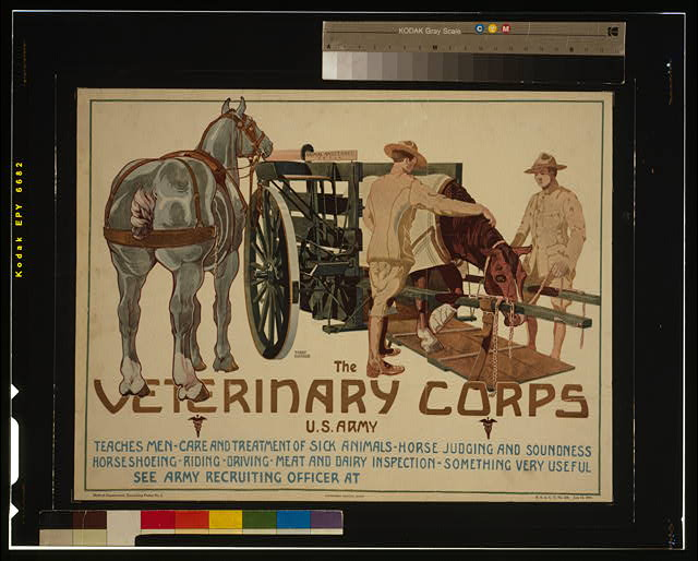 The Veterinary Corps, U.S. Army, teaches men care and treatment of sick animals; horse judging and soundness; horseshoeing; riding; driving; meat and dairy inspection - something very useful