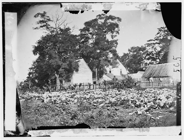 Cedar Mountain, Virginia. Mrs. Hudson's house and cabbage patch on battlefield