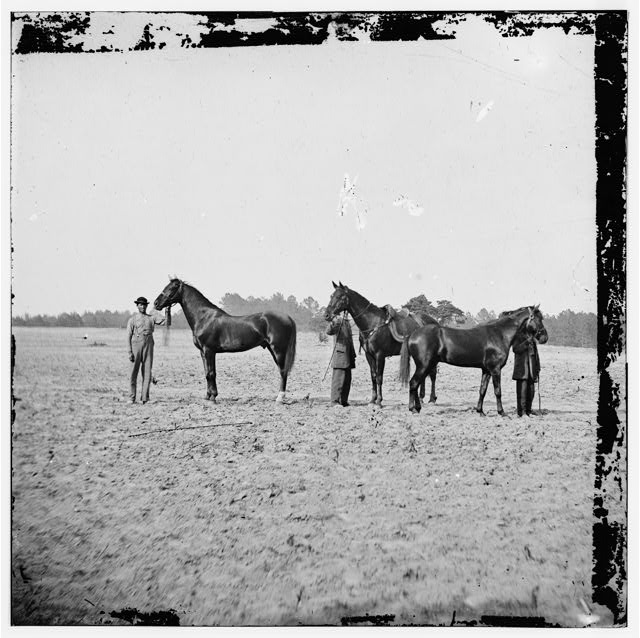 Cold Harbor, Virginia. U.S. Grant's horses: on left, EGYPT, center, CINCINNATI, right, JEFF DAVIS