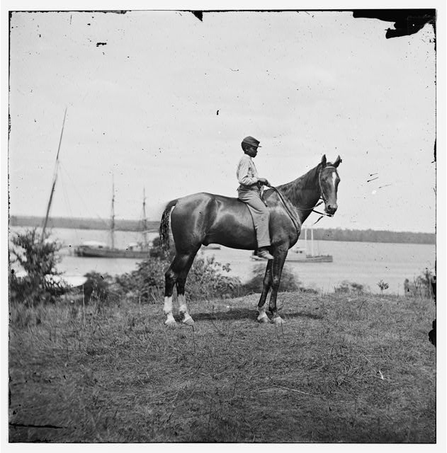 Cold Harbor, Virginia. Gen. John A. Rawlin's horse