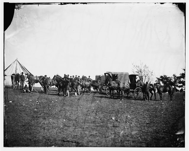 Culpeper, Virginia. Capt. Pierce's private horses, wagons, etc.