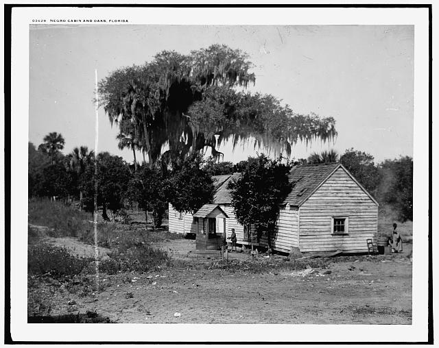 Negro cabin and oaks, Florida
