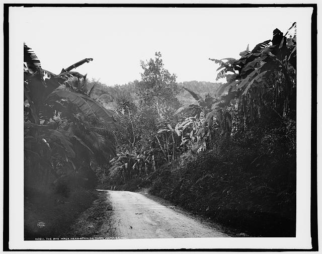 The Bog Walk near Spanish Town, Jamaica, W.I.