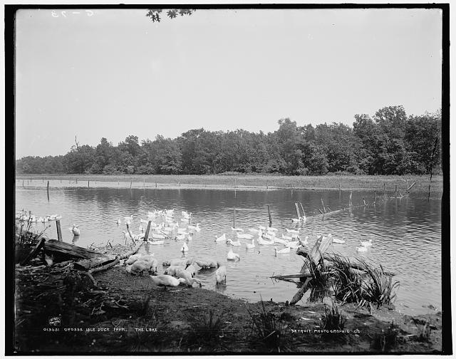 Grosse Isle duck farm, the lake
