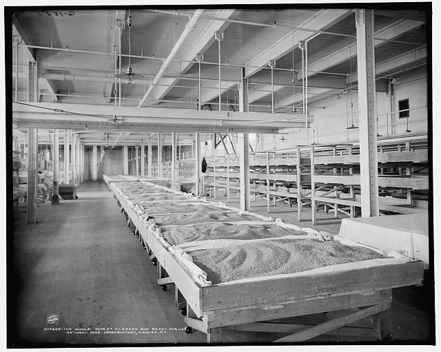 The Whole wheat cleaned and ready for use, Natural Food Conservatory, Niagara, N.Y.