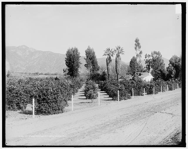 Mt. Wilson from the Old Shorb Ranch, Calif.
