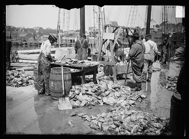 [Weighing up the catch, Gloucester, Mass.]