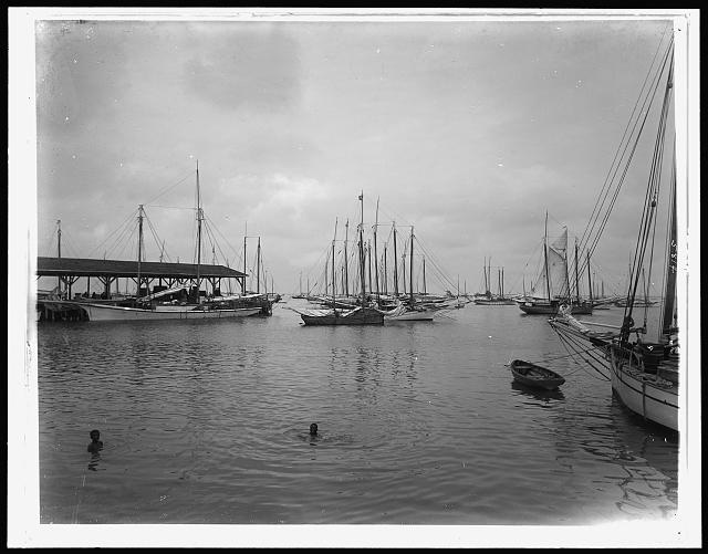 Sponge fleet in harbor, Key West, Fla.