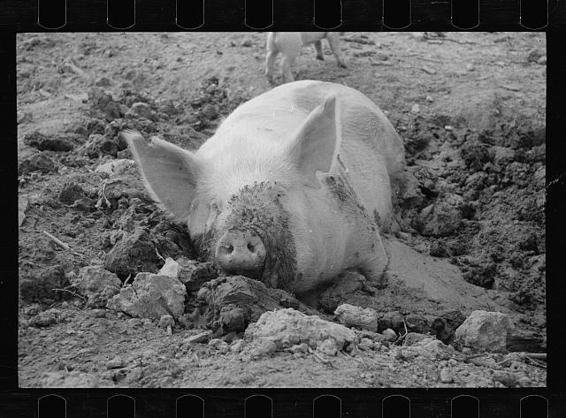 [Untitled photo, possibly related to: Mud bath, Prince George's County, Maryland]