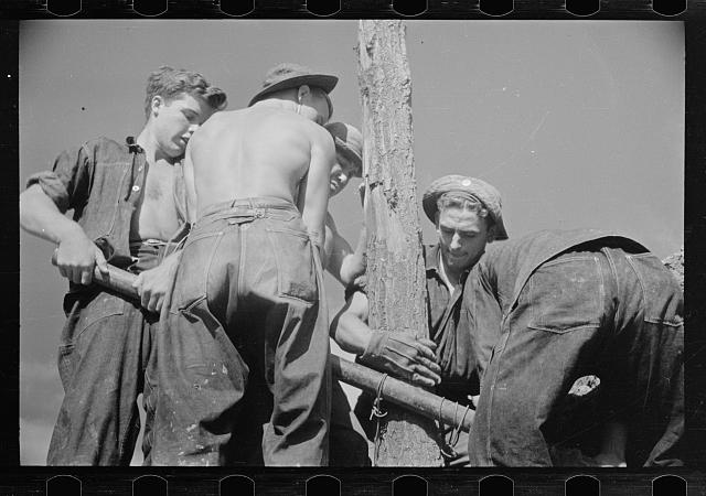 CCC (Civilian Conservation Corps) boys at work, Beltsville, Maryland