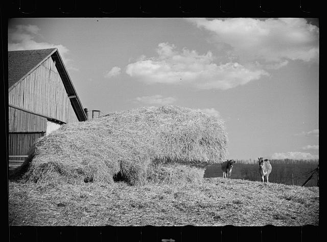 [Untitled photo, possibly related to: Dairy barn and outside haystack, Chattanooga, Tennessee]