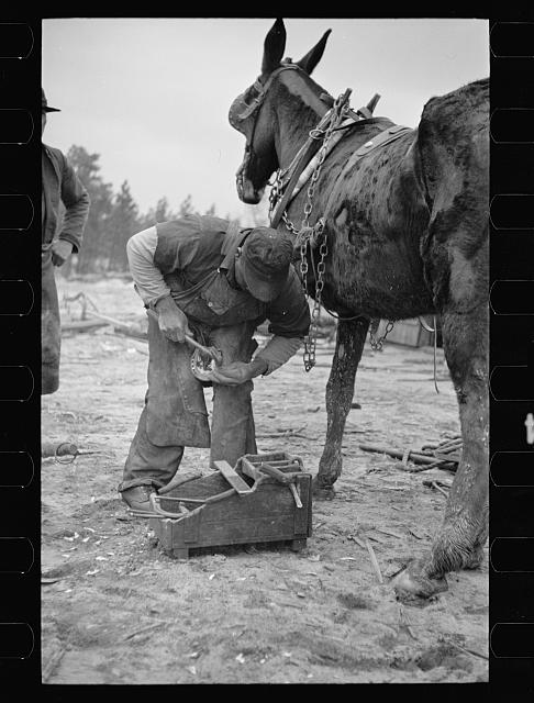 [Untitled photo, possibly related to: Replacing shoe in the field, North Carolina]